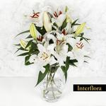 Interflora White Lilies