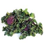 Natoora Worcestershire Purple Sprouting Broccoli