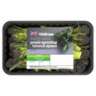 Purple Sprouting Broccoli Spears Waitrose